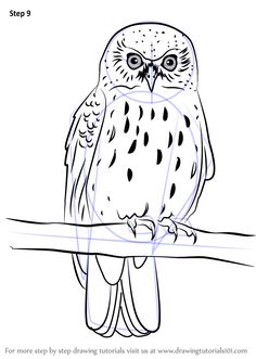 Step by step How to Draw a Morepork in 9 easy steps Harry Potter Drawings, Disney Character Drawing, Drawings, Painting, Realistic Animal Drawings, Step By Step Painting, Owls Drawing, Realistic Paintings, Bird Art