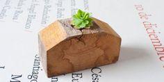 maceta de madera, tiesto de plantas suculentas, macetero pequeño.  madera de castaño ebanistería