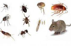 Como Acabar Con Las Ratas En El Campo Seis Formas De Alejar A Los Insectos De Manera Natural