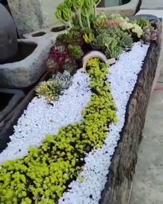 Succulent Planter WOWExquisite Succulent Planter WOW Best White Gravel Landscaping Ideas & Designs For 2019 Amazing DIY Spring arrangements that remarkably differentiate the color and decoration in the garden Succulent Gardening, Garden Planters, Planting Succulents, Garden Art, Succulent Care, Container Gardening, Rain Garden, Gardening Books, Organic Gardening