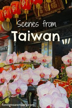 Orchids and Lanterns – Taiwan  -----> Tour de Taiwan & Flowers – [Photographing 2015] The Twelfth Week  (For more awesome photos, click http://foreignsanctuary.com/2015/04/11/tour-de-taiwan-flowers-photographing-2015-the-twelfth-week/ )