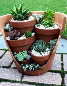 Succulents in Brocken pot