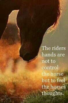 A rider's hands are not to control the horse. but to feel the horse's thoughts. -Jean Luc Cornille, 2011 actually my thoughts are: A rider's hands are to lead the horse not to abuse the horse. All The Pretty Horses, Beautiful Horses, Beautiful Gorgeous, Inspirational Horse Quotes, Equestrian Quotes, Equine Quotes, Natural Horsemanship, All About Horses, Horse Training