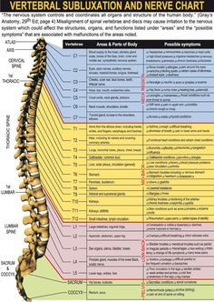 This Nerve Chart shows the relationship between your nervous system and all the organs of your body. If you have nerve irritation at any point along the spine it has potential to affect the way your body functions. Nerf Spinal, Spinal Cord, Spine Health, Qi Gong, Chiropractic Care, Chiropractic Benefits, Nerve Pain, Sciatic Nerve, Anatomy And Physiology
