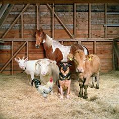 Farm barnyard animals, cute baby animals, wild animals, mundo animal, my an Unusual Animal Friendships, Unusual Animals, Animals Beautiful, Easy Animals, Beautiful Farm, Exotic Animals, Beautiful Family, Barnyard Animals, Cute Baby Animals