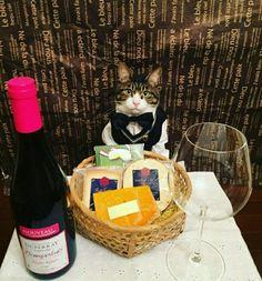 connoisseur cat knowz allz aboutz fine dining...