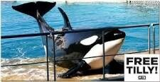 Poor Tilikum IS LOCKED UP IN THIS CONCRETE CELL AT SEAWORLD 24/7. He was illegally taken from his family in the wild as a baby!