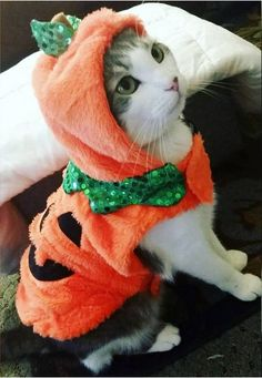 We've gathered the best of the best dog Halloween costumes and cat Halloween costumes to help you celebrate your favorite spooky holiday with your entire family - pets included! Check out our picks of the 40 best Halloween costumes for pets. Best Dog Halloween Costumes, Cute Cat Costumes, Looks Halloween, Animal Costumes, Pet Costumes, Halloween Cat, Halloween Dress, Kitten Costumes, Family Halloween