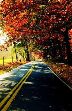 Fall road trips!
