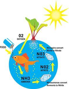 1000 Images About Aquaponics And Aquaculture On Pinterest