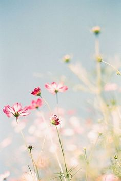 I just want to be laying down in this spring meadow looking up to the clear blue sky - bliss.: