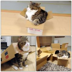 Maru - a passionate lover of boxes
