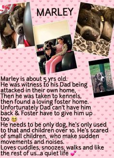 Please help Marley find a FUREVER or another foster home until his FUREVER turns up. Please read the photo, its heartbreaking. Dont allow Marley to become stressed and depressed in kennels. #HelpMarley Repin, tweet post of FB & G+...Please x