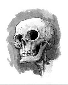 How to Draw/ Learn to draw/sketch: Online Drawing: Skull Sketch  Ref for poster idea