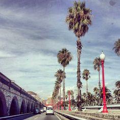 Barcelona palm tree