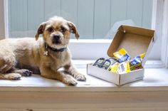 This Company Wants To Give Free Products To Your Dog