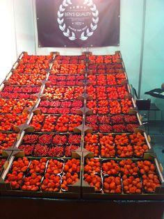 Hollands Rood Fruit.