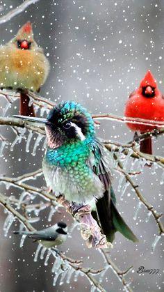 Красивая птичка - анимация на телефон №1292164
