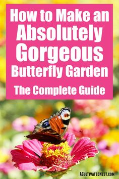 How to Build a Butterfly Garden- Making a gorgeous butterfly garden in your yard is easy, if you know what butterflies like! Here is the complete guide to starting a butterfly garden! Amazing Gardens, Beautiful Gardens, Organic Gardening, Gardening Tips, Butterfly Bush, Butterfly Plants, Simple Butterfly, Flower Plants, Small Water Features