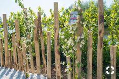 Garden Design Ideas - New ideas Beach Gardens, Outdoor Gardens, Fence Design, Garden Design, Evergreen Shrubs, Garden Fencing, Dream Garden, Garden Projects, Amazing Gardens