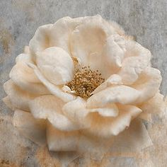 Featured Art - Vintage Rose I Square by Jai Johnson