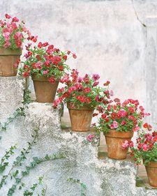 Pansies and Violas - Martha Stewart Home & Garden