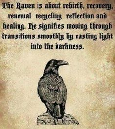 If a raven totem has come into our life, magic is at play. Raven activates the energy of magic and links it to our will and intention. With this totem, we can make great changes in our life Vikings, Rabe Tattoo, Tarot, Animal Spirit Guides, Raven Spirit Animal, Raven Art, Raven Totem, Crow Or Raven, Crow Totem