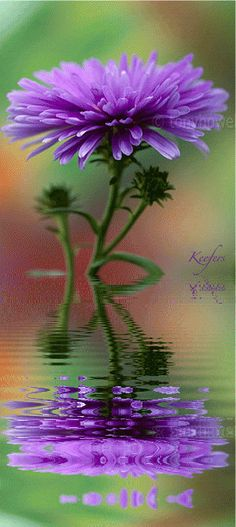 animated flower reflection | Flowers, Animated Graphics, Animated Gifs, Flores, Water Reflection ...