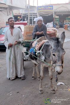 Donkey Cart at Hurghada Market - Egypt,