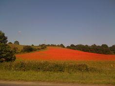 Poppy field Bewdley