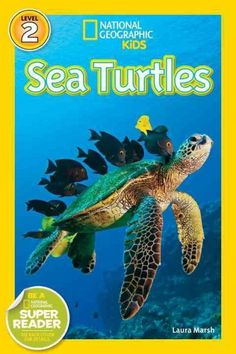 Presents the life of sea turtles, including where they travel, how they build nests, and what they eat.