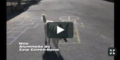 CORES DE CAMBADOS: O VÍDEOCLIP DO COLEXIO DE COIRÓN ACADA 4 NOMINACIÓ...