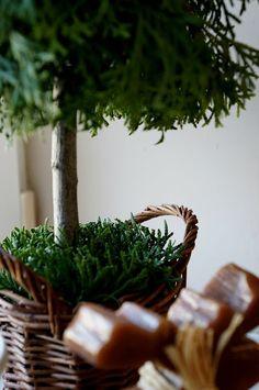 Choinki z gałęzi tui Small Christmas Trees, Christmas Crafts, Tree Decorations, Flower Arrangements, Herbs, Diy Crafts, Holiday Decor, Floral, Flowers