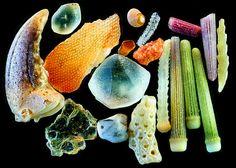 Vista microscópica de granos de arena marina.