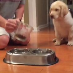 Mar 2020 - Here are some of the best and fluffiest animal videos you'll see online. See more ideas about Cute animals, Cute baby animals and Funny animals. Funny Dog Videos, Funny Animal Memes, Cute Funny Animals, Cute Baby Animals, Funny Dogs, Cute Puppies, Cute Dogs, Cute Babies, Puppies Puppies