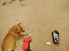 Some Easy DIY Dog Toys