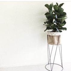 kmart pot stand repainted fiddle leaf fig