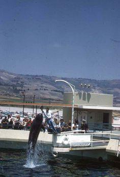 Marineland 1950's.