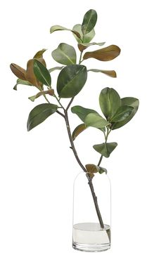 Faux Florals and Botanicals Plant Illustration, Botanical Illustration, Ikebana, Color Plan, Botanical Art, Plant Decor, Botany, Flower Vases, Architecture Art
