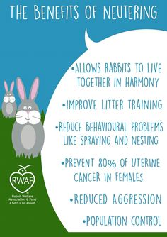071e798b It's vital that all rabbits are neutered to enable them The best chance of  a long