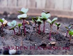 Garden Planning 101: Selecting Seeds and Plants | Sweet Domesticity