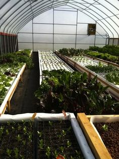 With Retirement on Horizon, Ohio Couple Launches Aquaponic Business : quite interesting experience...