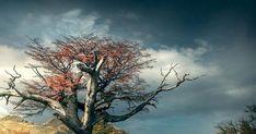 #fotografia Fotos de Paisagens: #fotografia #paisagem #cursofotografia #photoshop #lightroom #nikon #canon #landscapes #nature… #paisagens