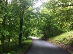 El Bosque de Irati, Navarra (Irati Exrem)   http://cincuentopia.com