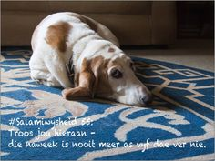Jackson, Dogs, Animals, Animales, Animaux, Animal Memes, Animal, Pet Dogs, Dog