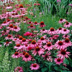 American Meadows has been supplying gardeners with the best wildflower seeds, perennials, bulbs and how-to information since Guaranteed. Flower Petals, Cut Flowers, Colorful Flowers, Purple Flowers, Deer Resistant Perennials, American Meadows, Purple Daisy, Spring Plants, How To Attract Birds