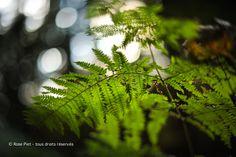 Fougères au bois de Soleilmont, Belgique