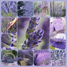 Lost Soul, Garden, Flowers, Plants, Color Boards, Collagen, Colors, Garten, Collages