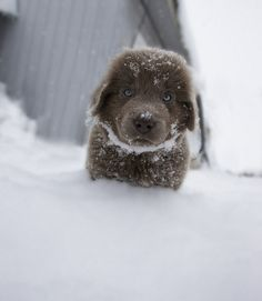 National Puppy Day is a ridiculously adorable holiday organized to educate the public on the horrors of puppy mills, promote non-pet store adoptions and, above all, celebrate the puppies in our lives. Cute Puppies, Cute Dogs, Dogs And Puppies, Doggies, Fluffy Puppies, Big Dogs, I Love Dogs, Beautiful Dogs, Animals Beautiful