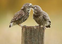 2. 2 owls kissing and 2 monkeys hugging